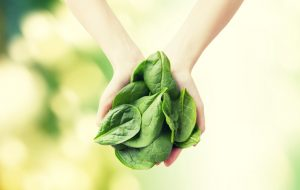 is spinach healthy?